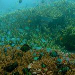 Дайв сайт Amed Wall, Бали