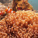 Дайв-сайт Коралл Гарден, Туламбен, Бали