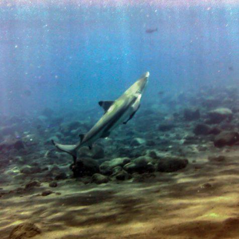 Отзыв Геннадия Литуненко об отдыхе и дайвинге на Бали